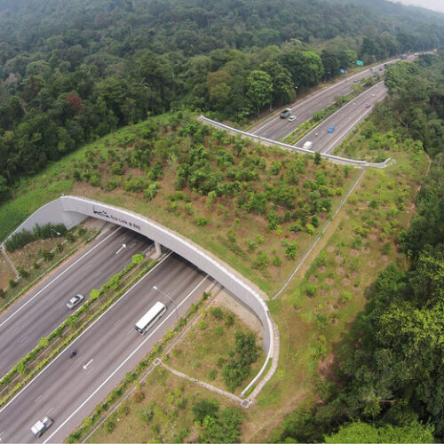 These Beautiful Wildlife Bridges Are Saving Animal Lives