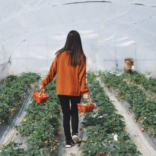 How can gardening help you to navigate depression?
