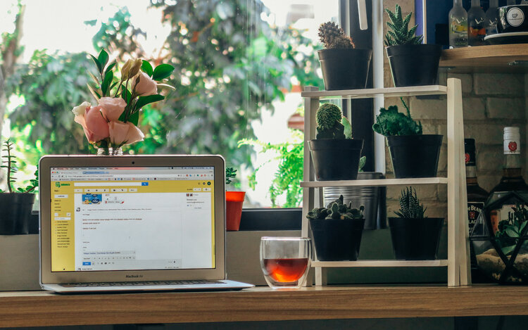 Plants can improve your work life