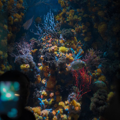 Warming, acidic oceans may nearly eliminate coral reef habitats by 2100