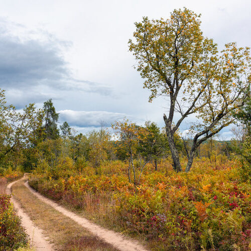 Farming in the Forest: A Chance to Reverse 1,000 Years of Destructive Land-Use Practices